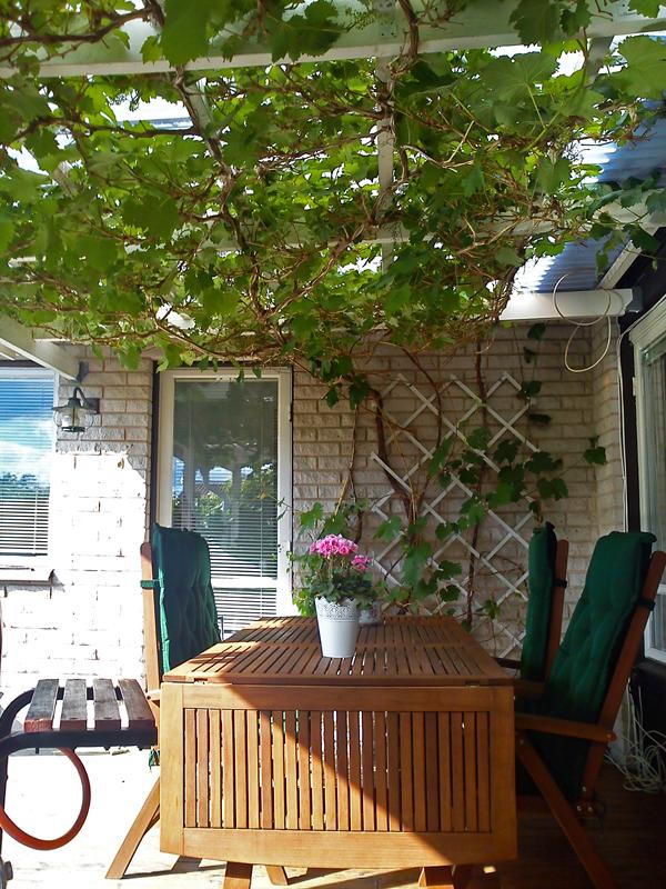 Vårt gröna tak. I år har vi bytt plats på bordet och soffan.